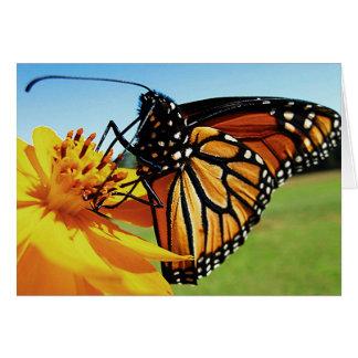 macro monarch card
