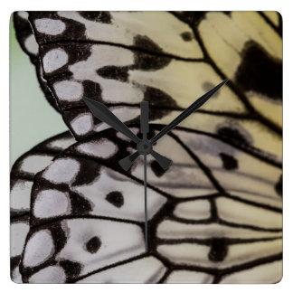 Macro Nymph Butterfly Wing Clocks