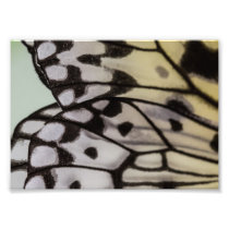 Macro Nymph Butterfly Wing Photo Print