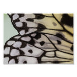 Macro Nymph Butterfly Wing Photographic Print