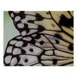 Macro Nymph Butterfly Wing Print