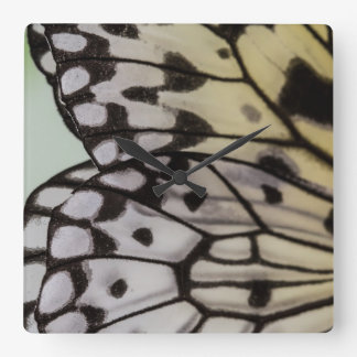 Macro Nymph Butterfly Wing Square Wall Clock