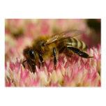 Macro occidental de la abeja de la miel tarjeta personal