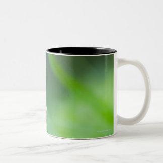 Macro of a butterfly- Boloria euphrosyne on Two-Tone Coffee Mug