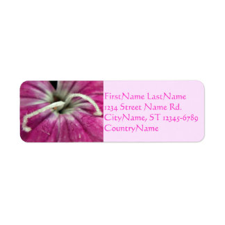 Macro of a Pink Dianthus Label