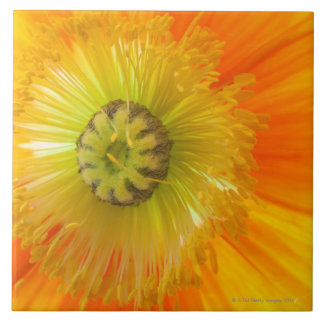 Macro of orange poppy with low depth of field tile