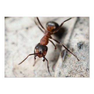 Macro of red ant card