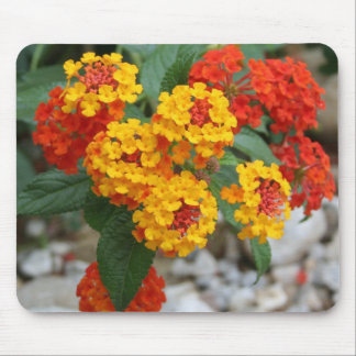 Macro Of Shrub Verbenas or Lantanas Mouse Pad
