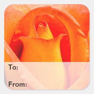 Macro Orange and Yellow Rose Square Sticker