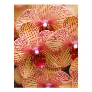Macro Orchid Letterhead Template