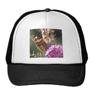 Macro Painted Lady Mesh Hats