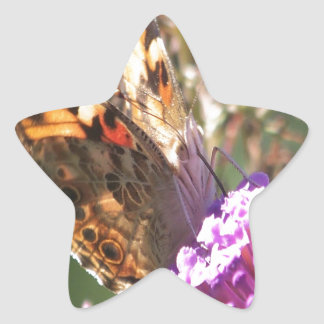 Macro Painted Lady Star Sticker
