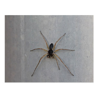 Macro photo black and beige spider, 7 legs post cards