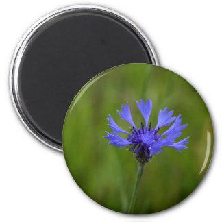 Macro photo of a cornflower (Centaurea cyanus) 2 Inch Round Magnet