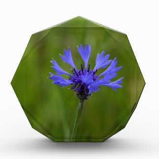 Macro photo of a cornflower (Centaurea cyanus) Acrylic Award