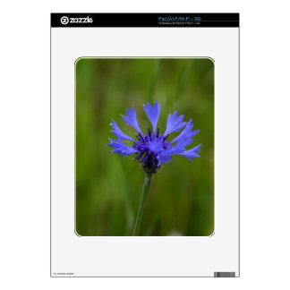 Macro photo of a cornflower (Centaurea cyanus) Decals For iPad