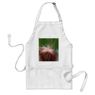 Macro photo of a female maize flower. adult apron