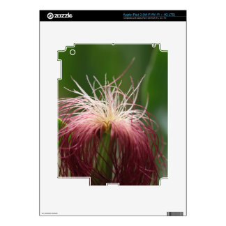 Macro photo of a female maize flower. iPad 3 skin