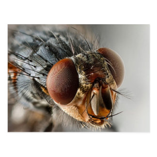 Macro photo of a fly postcard
