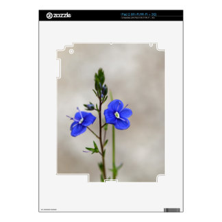 Macro photo of a  german speedwell decal for iPad 2