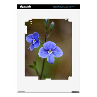 Macro photo of a  german speedwell iPad 3 skin