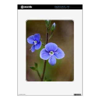 Macro photo of a  german speedwell iPad skins