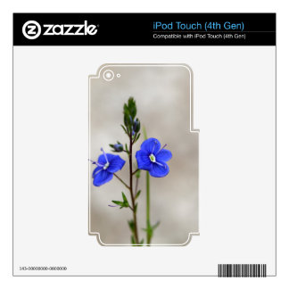 Macro photo of a  german speedwell iPod touch 4G skins