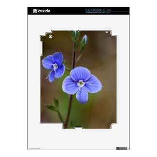 Macro photo of a  german speedwell skins for iPad 2