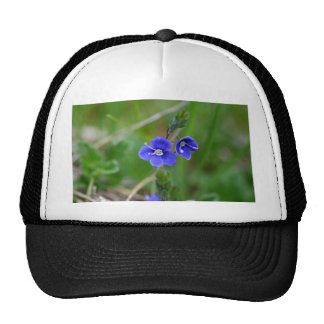 Macro photo of a  german speedwell trucker hat