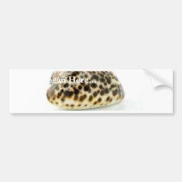 Macro Photo Of A Seashell 4 Bumper Sticker