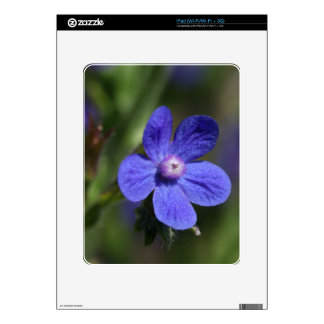 Macro photo of an Italian Bugloss iPad Skins