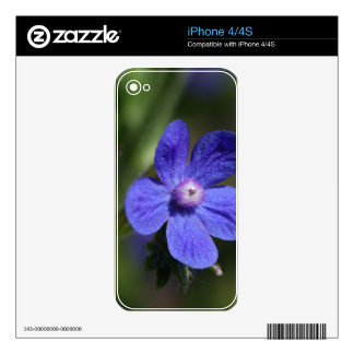 Macro photo of an Italian Bugloss Skins For The iPhone 4S