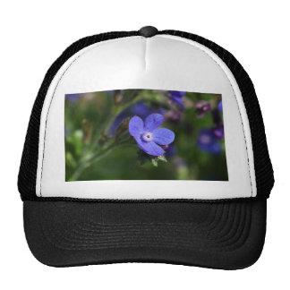 Macro photo of an Italian Bugloss Trucker Hat