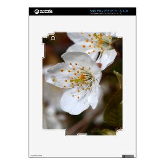 macro photo of cherry flowers decals for iPad 3