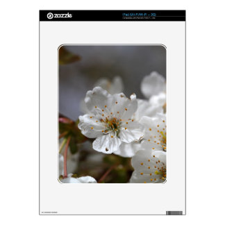 macro photo of cherry flowers iPad decal