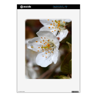 macro photo of cherry flowers iPad decals