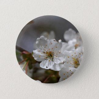 macro photo of cherry flowers pinback button