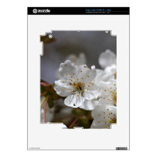 macro photo of cherry flowers skin for iPad 2