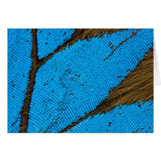 Macro photograph of a Butterfly wing Greeting Card