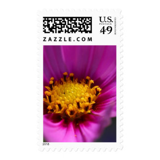 Macro Pic From Balboa Park Stamps