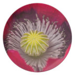 Macro Pink and Purple Poppy Flower Dinner Plates