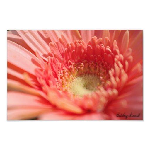 Macro Pink Photo Art