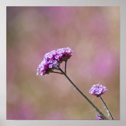 Macro Purple and Pink Flowers Print