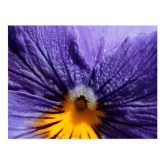 Macro: purple and yellow pansy postcard