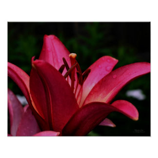 Macro Red Lily Floral Poster Print