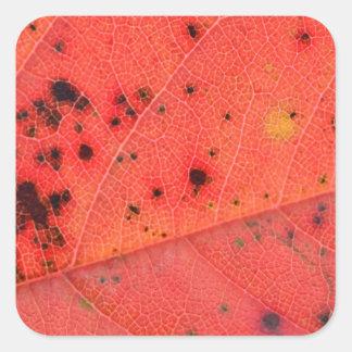Macro roja de la hoja pegatinas cuadradas