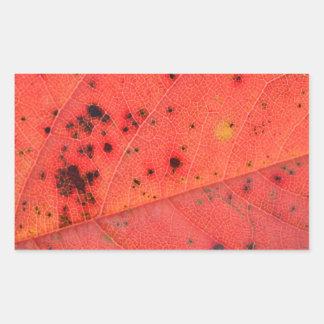 Macro roja de la hoja pegatina rectangular