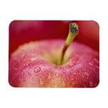 Macro roja de la manzana imán de vinilo