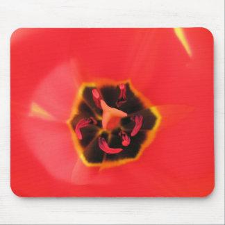 Macro roja Mousepad del tulipán Tapetes De Ratón