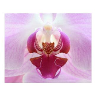 Macro rosada de la orquídea cojinete